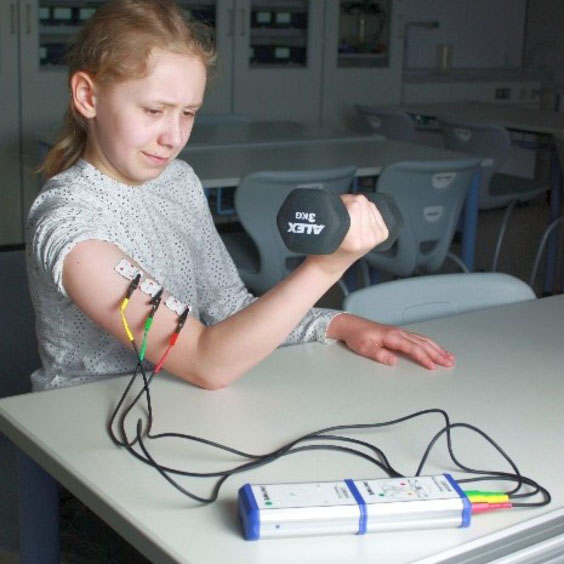 We investigate our muscular power - electromyography
